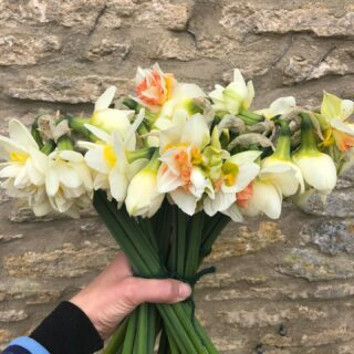 The double daffs are flowering and I have a few bunches available at the garden gate today *Limited availability*