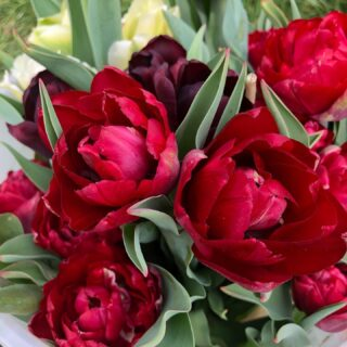 Bunches of British blooms available again next week!! Local delivery to Fairford and Lechlade. Surprise  someone with some cheery British grown flowers! £10 and £20 bunches  #britishgrownflowers #seasonalflowers #buybritish #makesomeonesday #flowerstagram #lockdown3 #keeponkeepingon #tulips #smallbusiness #buylocal #lechlade #fairford #cotswolds #gloucestershire