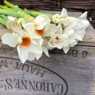 Lovely little bunches of scented narcissi are available in Fairford, Lechlade and Carterton Lynwood Cafe's this weekend!